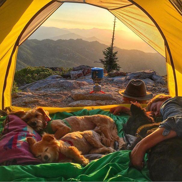 acampando con perros 1