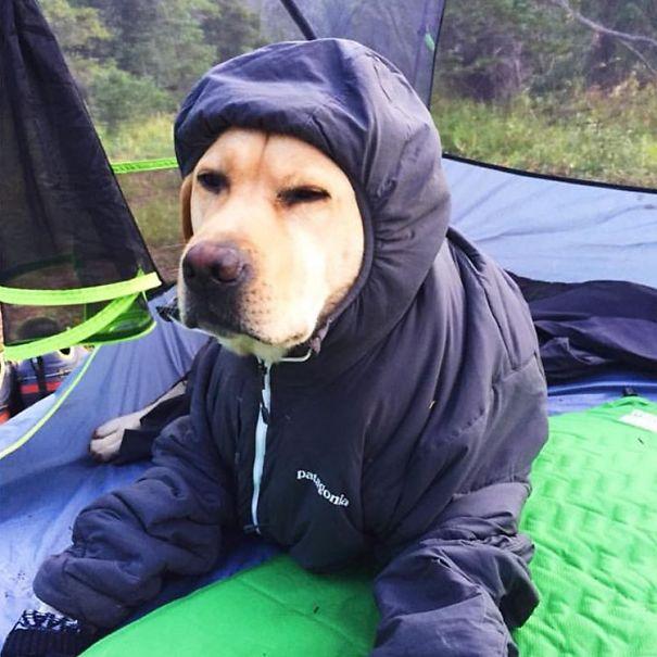 acampando con perros 10