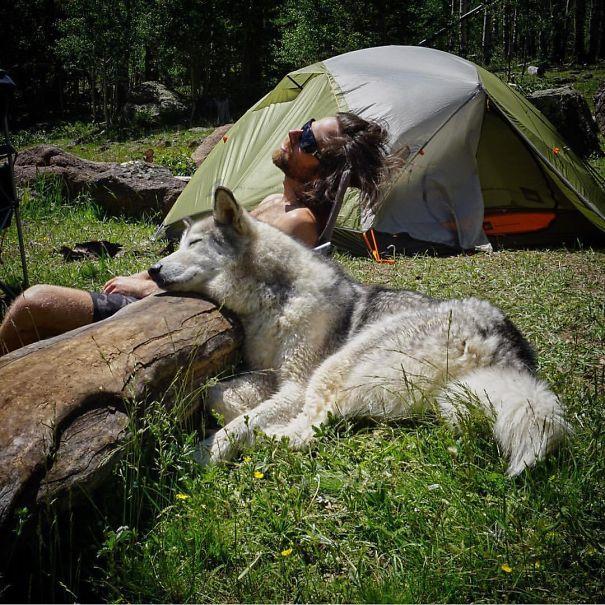 acampando con perros 11