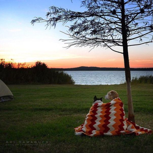 acampando con perros 14