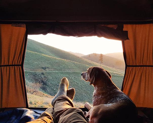 acampando con perros 16