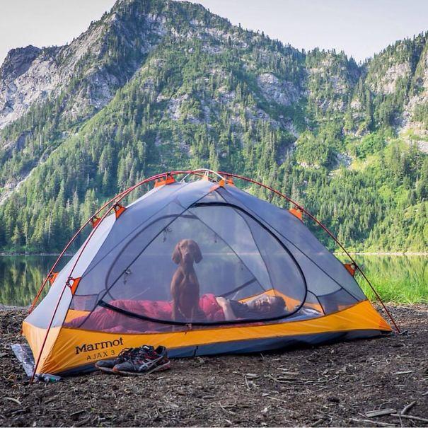 acampando con perros 19