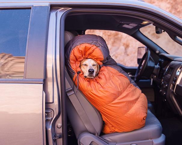 acampando con perros 2