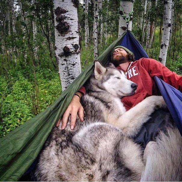 acampando con perros 3