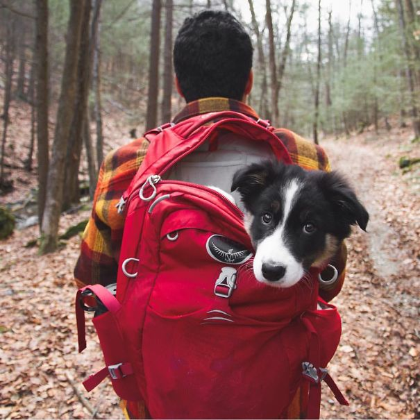acampando con perros 4