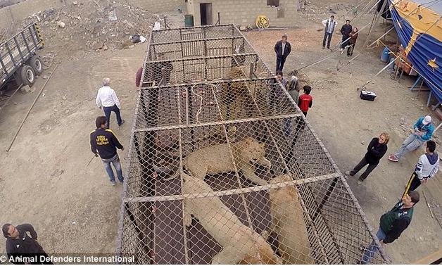 animales-maltratados-circo10