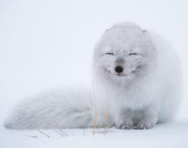 animales sonrientes 11