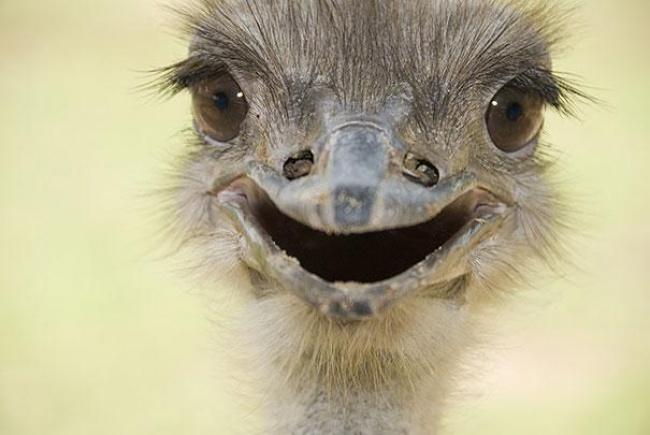 animales sonrientes 13