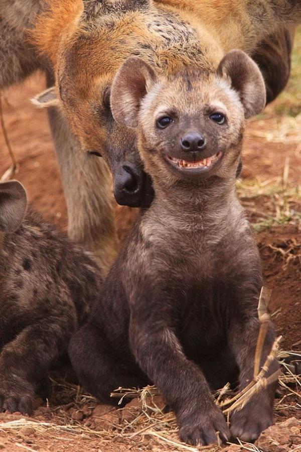 animales sonrientes 14