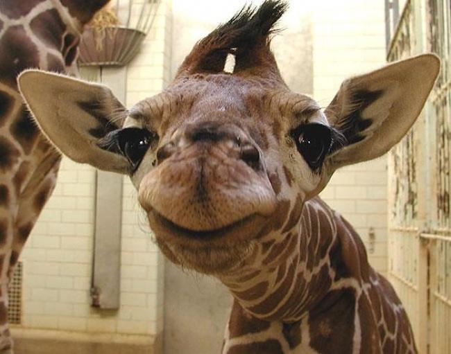 animales sonrientes 17