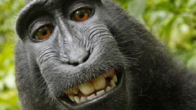 animales sonrientes 33
