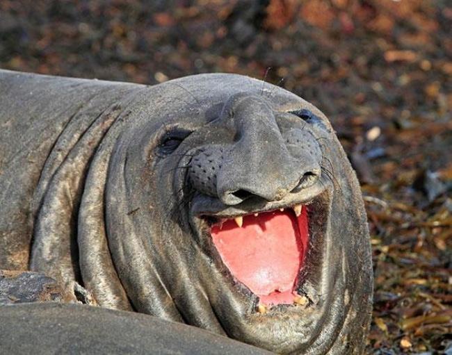 animales sonrientes 8