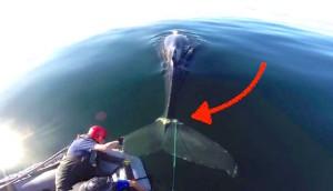 ballena-rescatada-cuerda