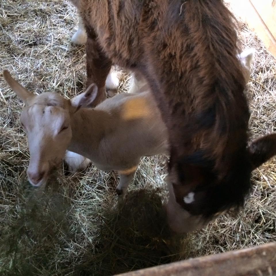 caballo-adoptado6