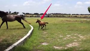 caballo-aprende-a-saltar