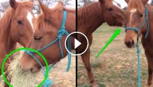caballos enamorados