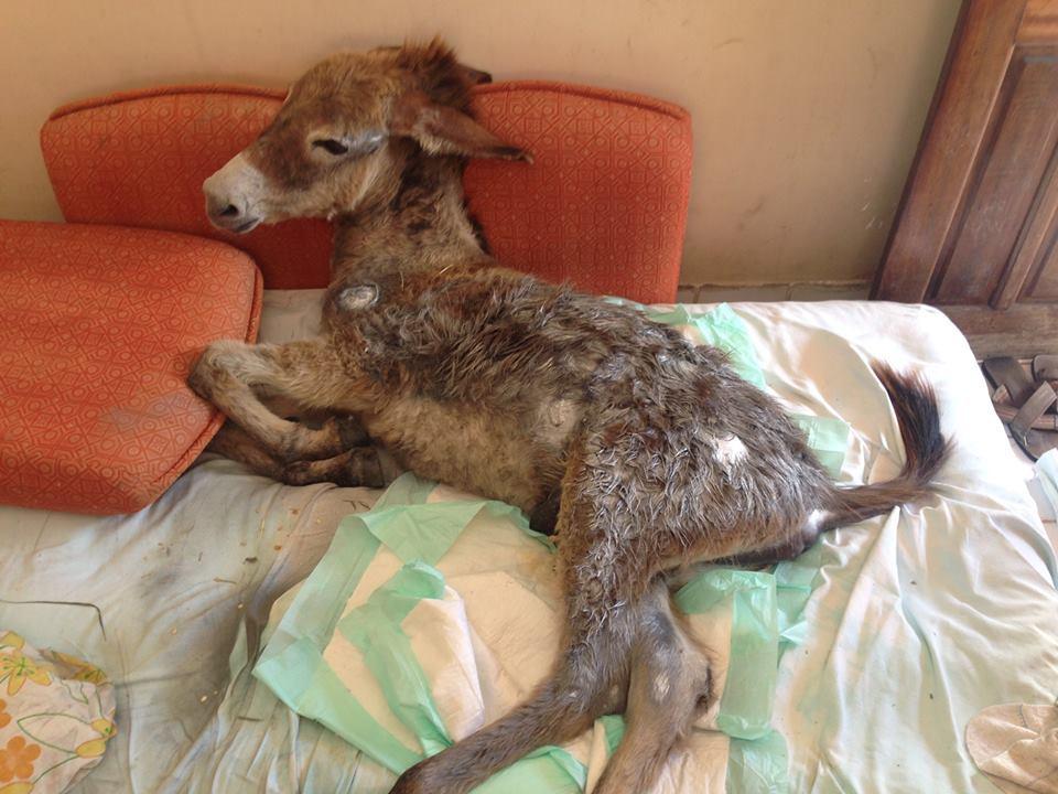 cachorro cuida burro 2