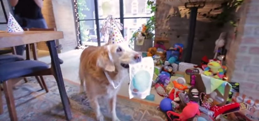 cumpleaños-perro-rescatista3