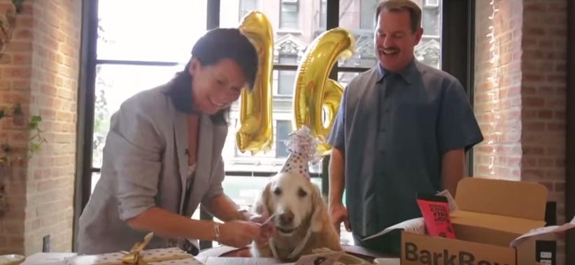 cumpleaños-perro-rescatista5