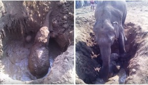 elefante-rescate-pozo