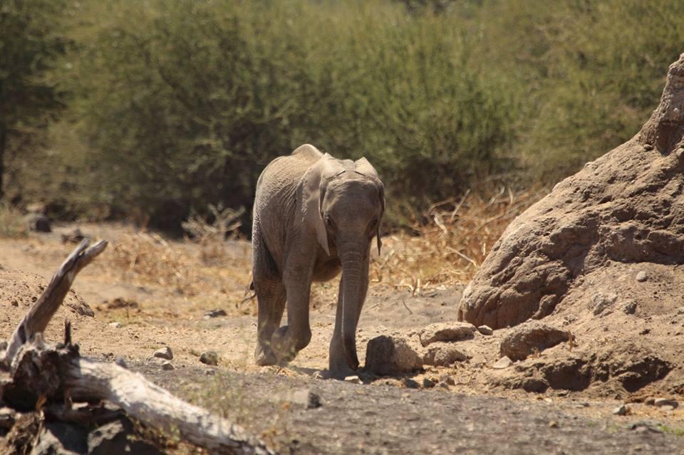 elefantes-bebes3
