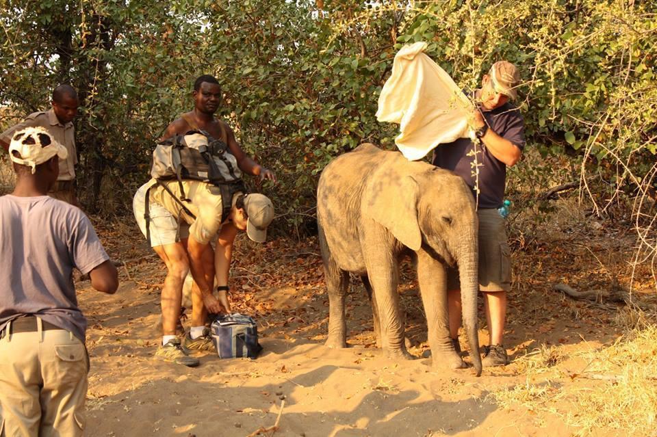 elefantes-bebes6