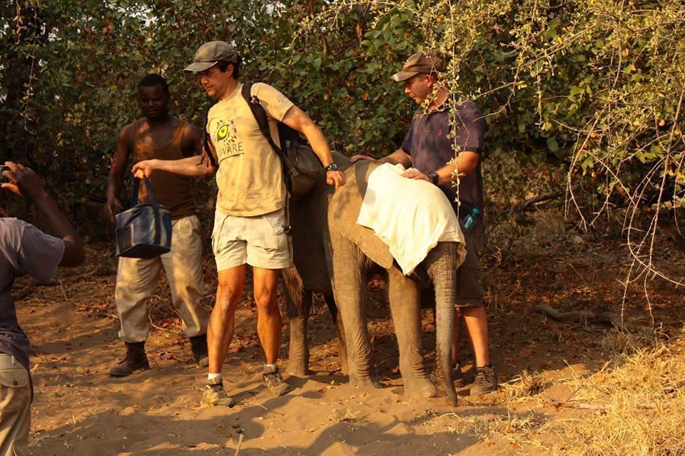 elefantes-bebes7