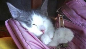 gato-primer-dia-clase