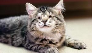 gatos-sin-ojos1 - copia
