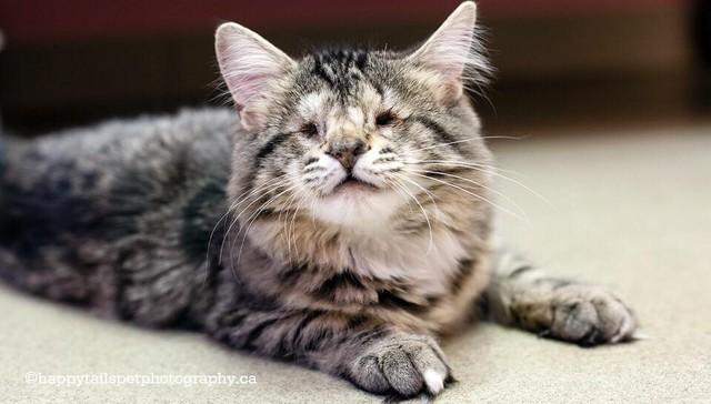gatos-sin-ojos1