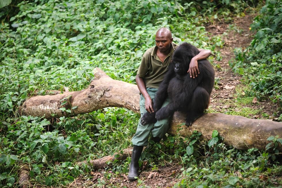 gorila-huerfano1