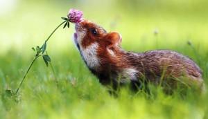 hamster11