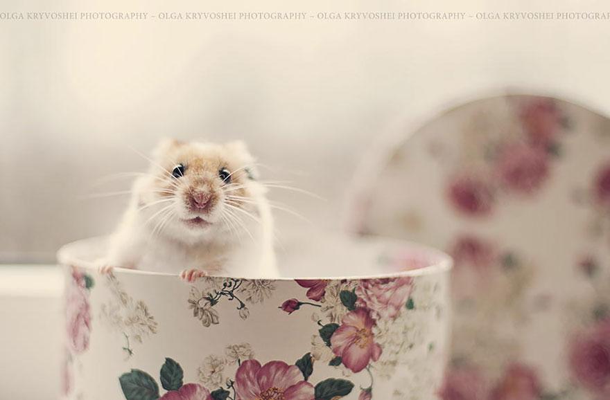 hamster13