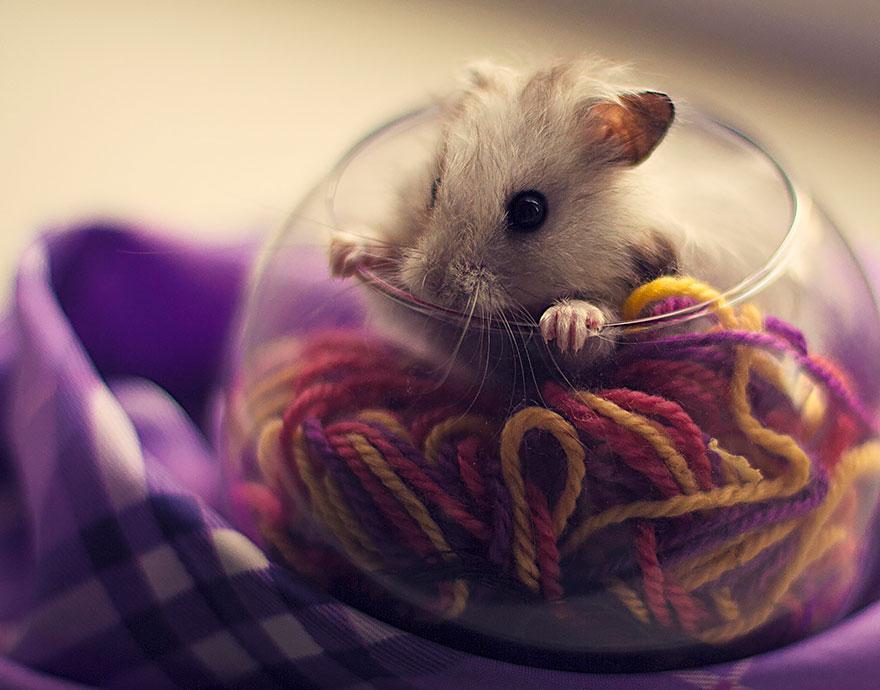 hamster14