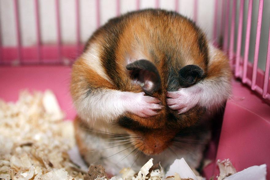 hamster17