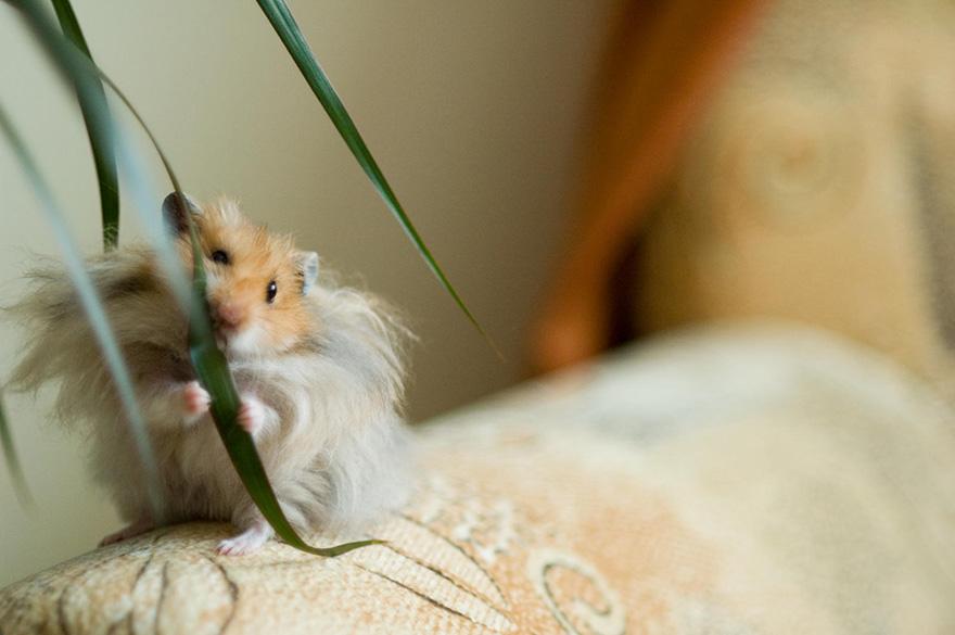 hamster19