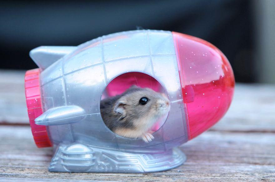 hamster22