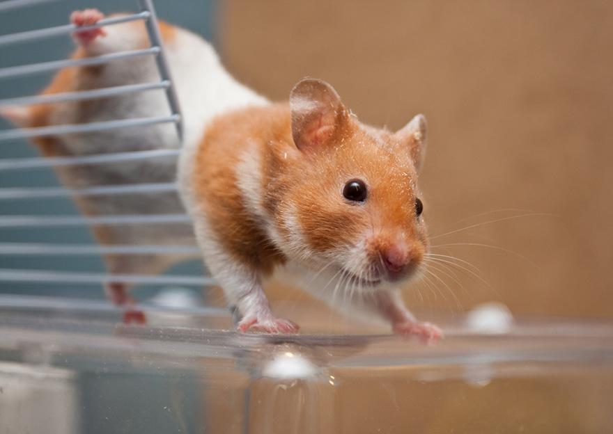 hamster23