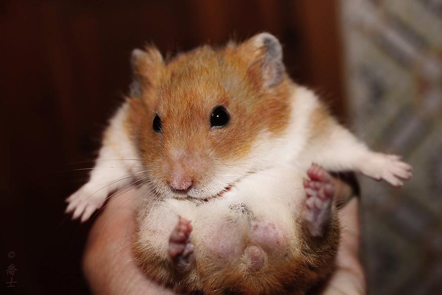 hamster24