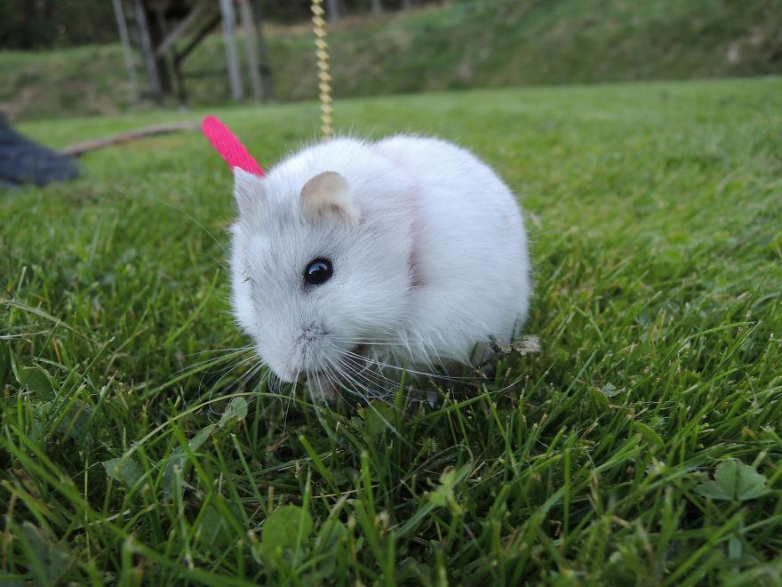 hamster28