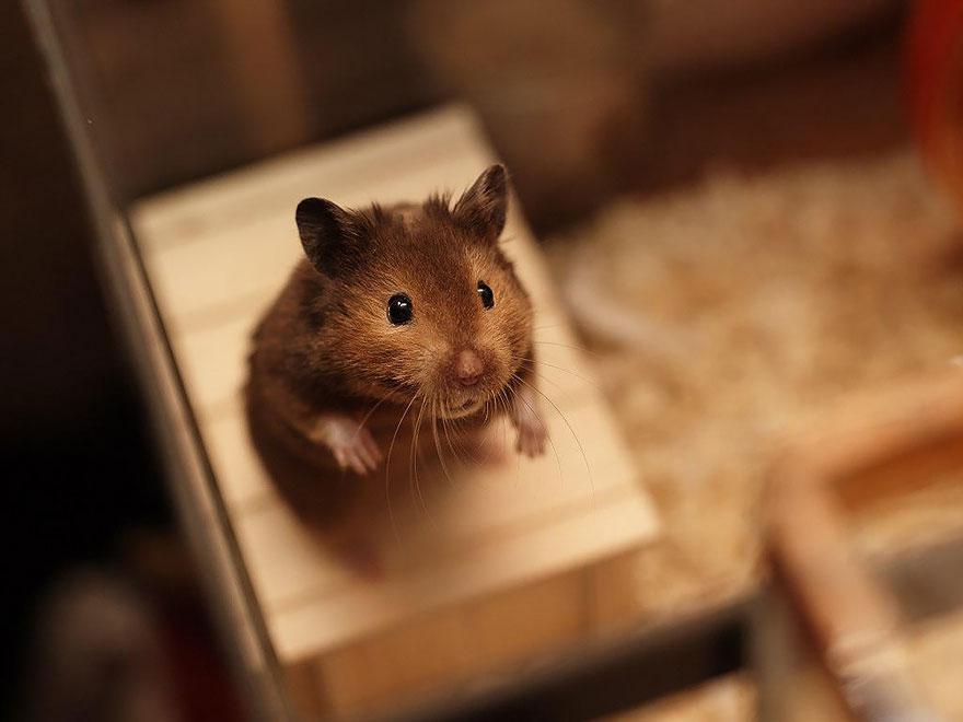 hamster9
