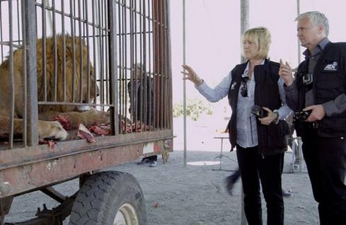 leones-maltratados-circo2