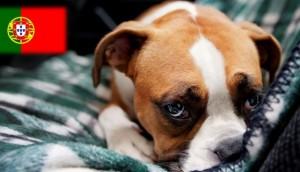 ley-de-portugal-para-agresores-a-mascotas