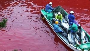matanza-delfines-japon3 - copia