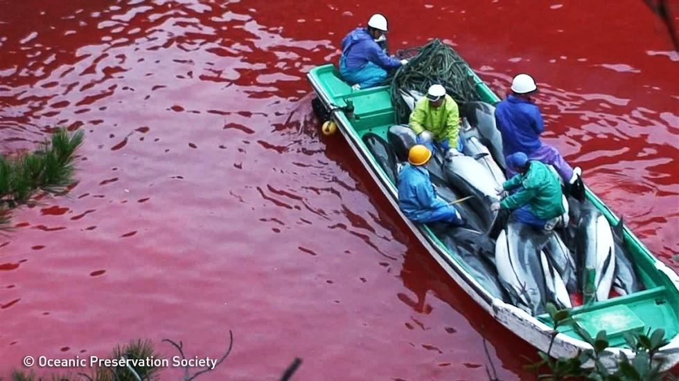 matanza-delfines-japon3