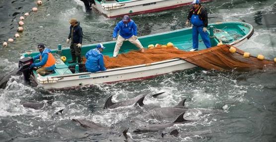 matanza-delfines-japon6