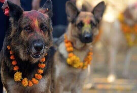 nepal celebra perros 1