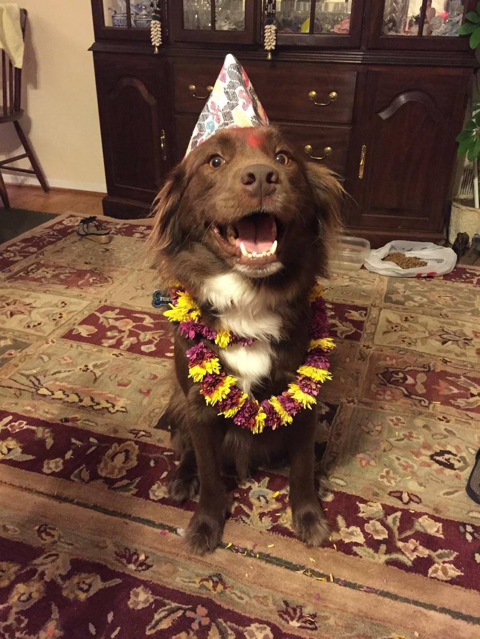 nepal celebra perros 2