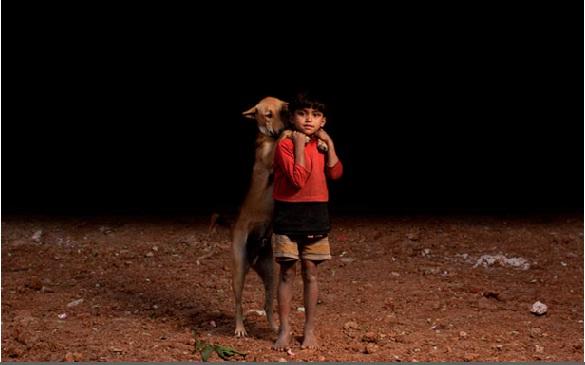niños huerfanos adoptan perros 1