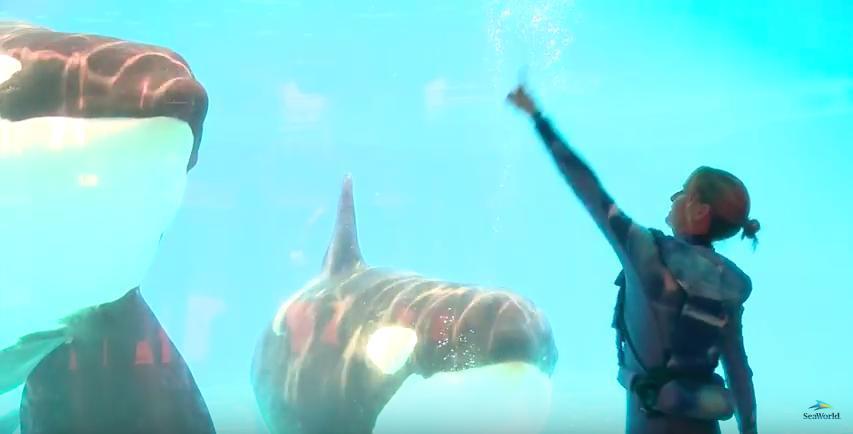 orcas-sw2